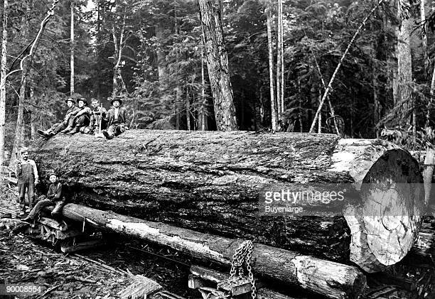 Darius Kinsey was a photographer active in western Washington State from 1890 to 1940 He is best known for his images of loggers and all phases of...