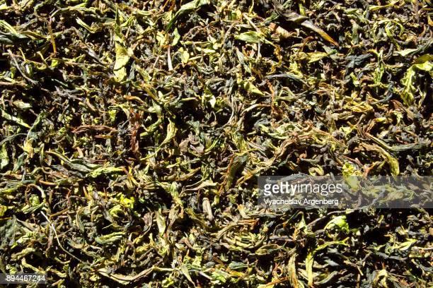 darjeeling tea fermented leaves - argenberg fotografías e imágenes de stock