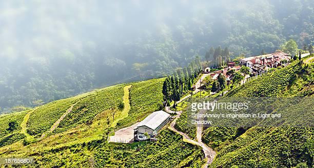 Darjeeling, Tea Garden,fog on hill side