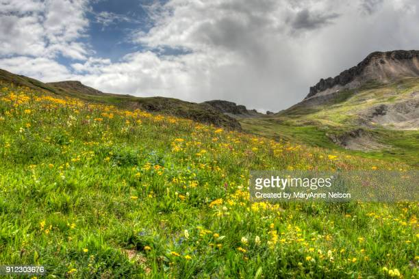 dark cloud and wildflower colors on maggie mountains - san juan mountains stock photos and pictures