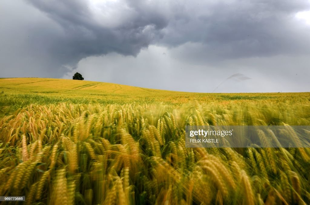TOPSHOT-GERMANY-WEATHER-AGRICULTURE : News Photo