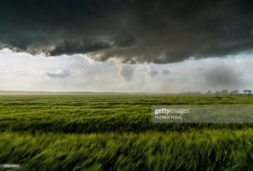 Dark clouds hang over a grain field near Petersdorf, northeastern Germany, on May 30, 2016. / AFP / dpa / Patrick Pleul / Germany OUT