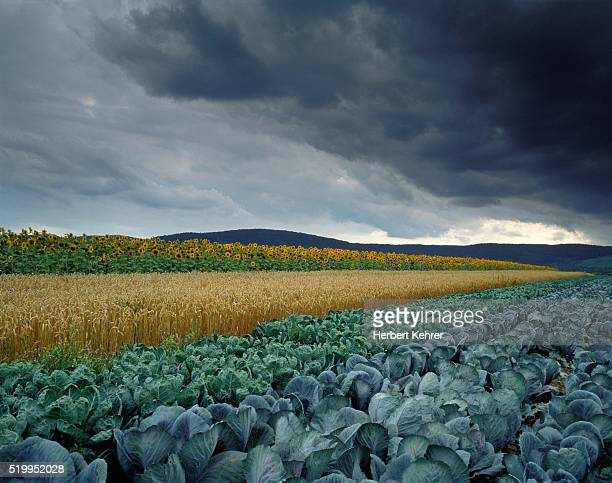 Dark Clouds over Agricultural Fields