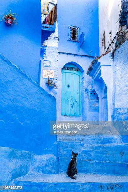 a dark coloured cat looks up quizzically at the turquoise door in a typical blue painted alleyway, wondering if this is the right way, in chefchaouen, known as the blue city, set in the rif mountains, morocco - chefchaouen photos et images de collection