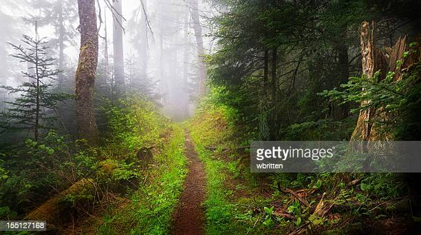 Dark Foggy Trail and Woods