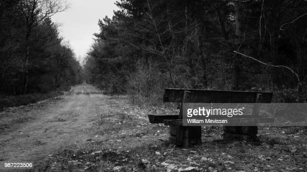 dark forest bench - william mevissen foto e immagini stock