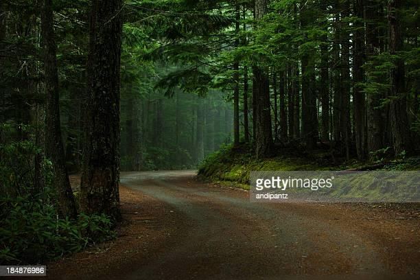 Forêt sombre