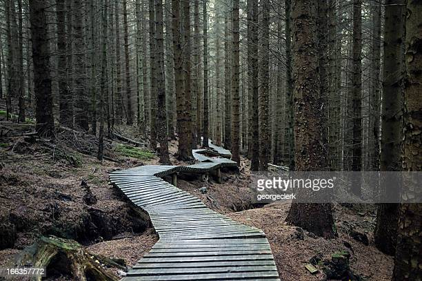 dark forest trail - track imprint stock photos and pictures