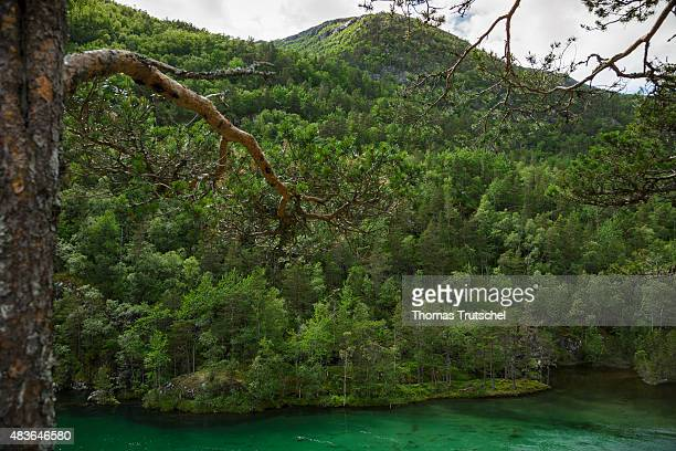 Dark green lake with mixed forest close to Kinsarvik at the national park of Hardangervidda in Norway on July 16 2015