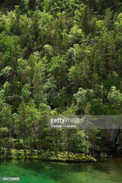 Dark green lake with mixed forest close to Kinsarvik at the national park of Hardangervidda on July 16 2015 in Kinsarvik Norway