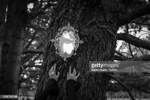 dark hands mirror forest - cambridge new zealand stock pictures, royalty-free photos & images