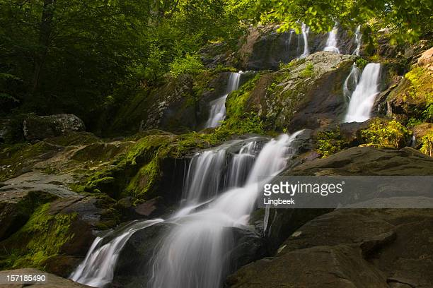 dark hollow falls on skyline drive, shenandoah national park - skyline drive virginia stock photos and pictures