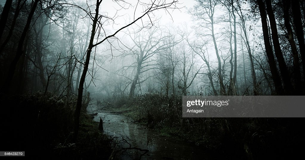 Dark Misty Forest : Stock Photo