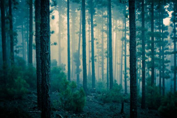 Dark Mystery Forest In The Fog Wall Art