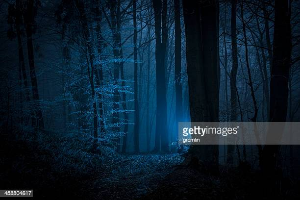 dark scary night forest shot with mysterious light - spooky stock pictures, royalty-free photos & images