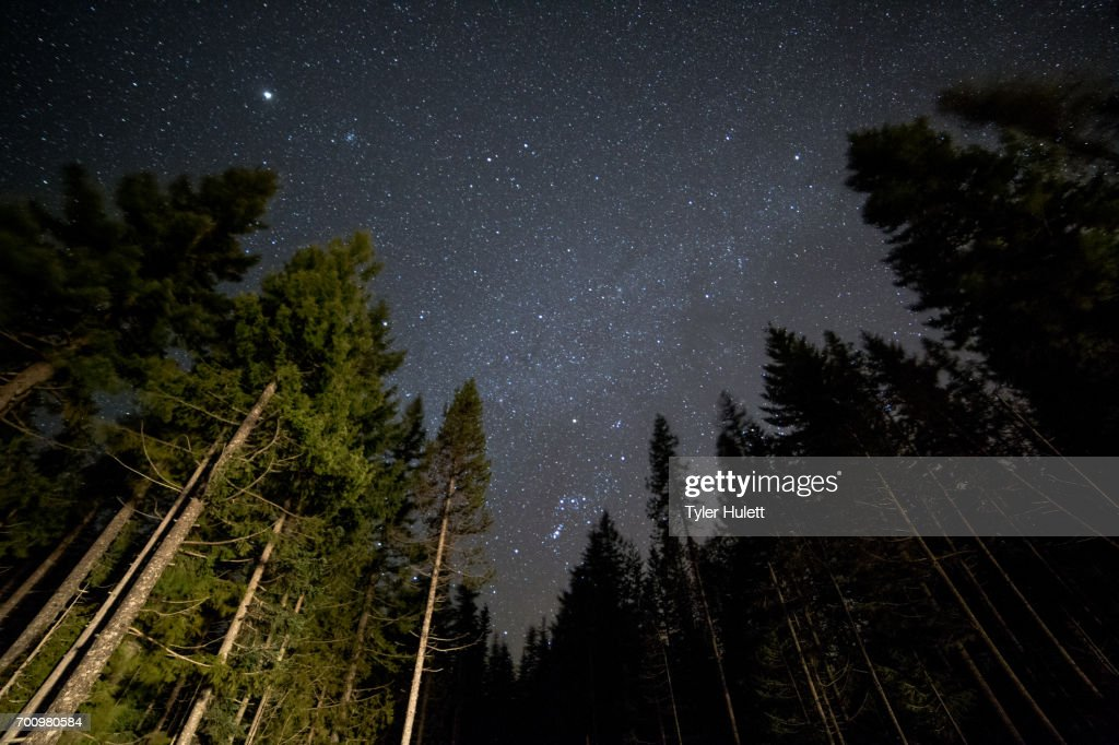 Dark sky forest and stars on Mt. Hood and light 2 : Stock Photo