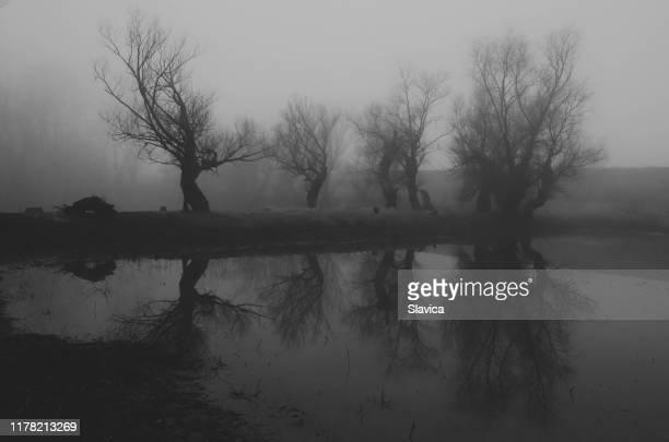 dunkle gruselige landschaft - kahler baum stock-fotos und bilder
