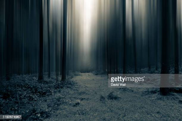 a dark spooky, moody path through the forest. with a blurred, artistic, abstract edit. - dark stock pictures, royalty-free photos & images