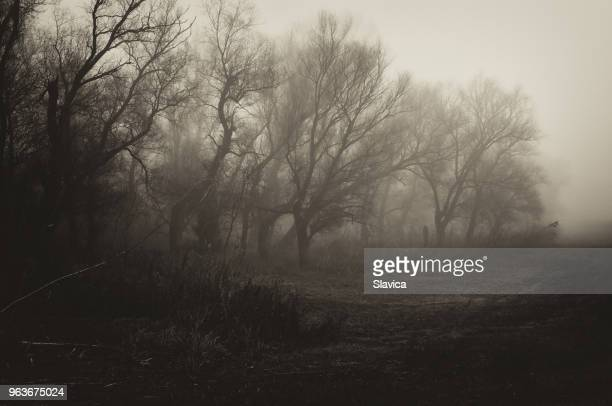dark spooky winter landscape - spooky stock pictures, royalty-free photos & images