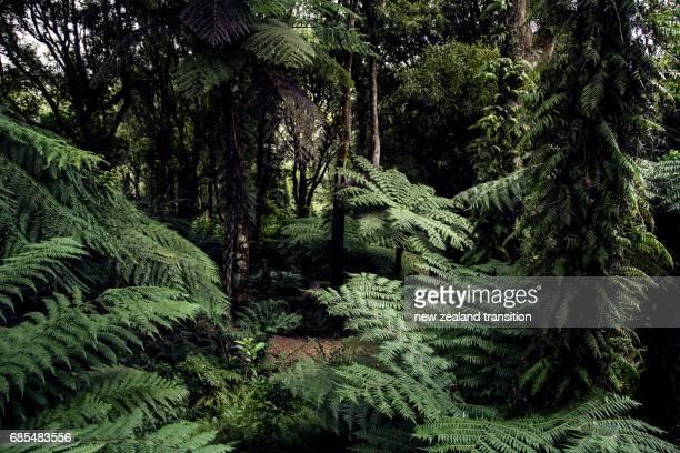 dark tree fern forest, Wellington