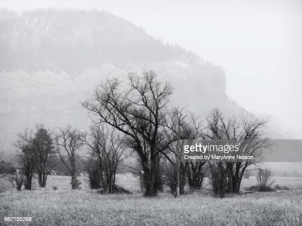 dark trees in winter fog - mary moody fotografías e imágenes de stock