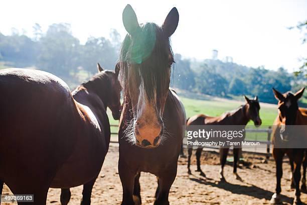 Darla the horse