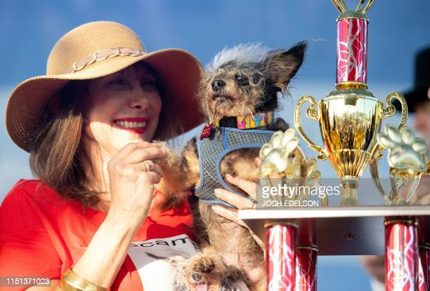 TOPSHOT Darlene Wright holds up Scamp the Tramp as it is announced that he won first prize in the World's Ugliest Dog Competition in Petaluma...