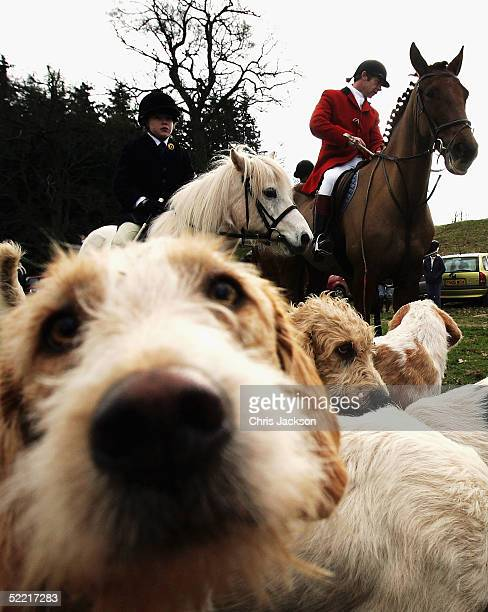 Darren Foxley, a master of the Brecon Talybont Hunt, prepares to ride through the town of Crickhowell on the first day of the enforcement of the...