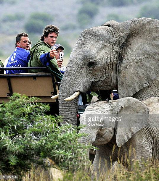 Darren Gough Kevin Pietersen and Michael Vaughan photograph a family of elephants during a trip around the Shamwari Game Reserve on February 3 2005...