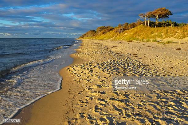 darss west beach - fischland darss zingst photos et images de collection