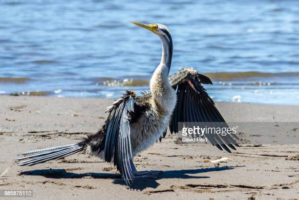 darter - reid,_wisconsin stock pictures, royalty-free photos & images