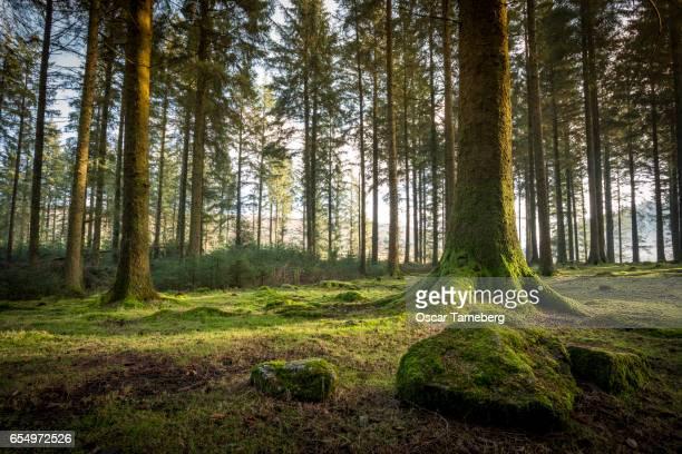 Dartmoor woodlands