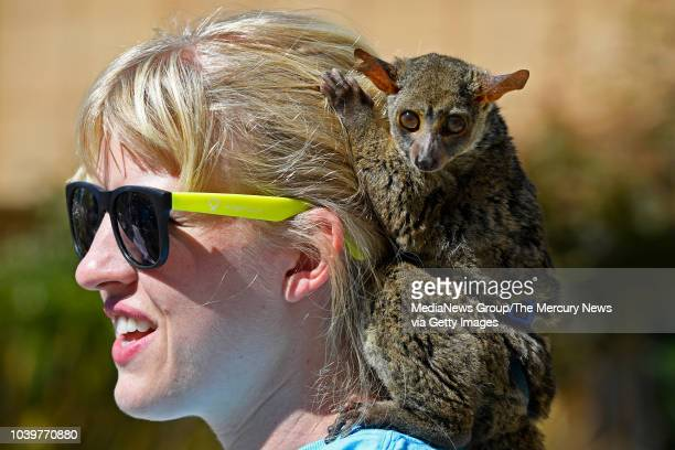 Darwin an African bush baby holds on to the hair of Lynette Lyon with Lyon Ranch Therapy Animals during National Rehabilitation Awareness Week at...