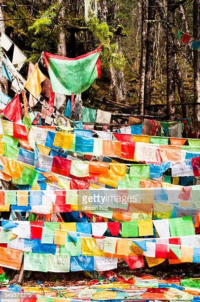 das Naturreservat Meili Xue Shan Gebetsfahnen im Wald