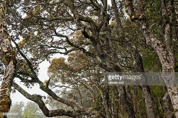 das Naturreservat Meili Xue Shan