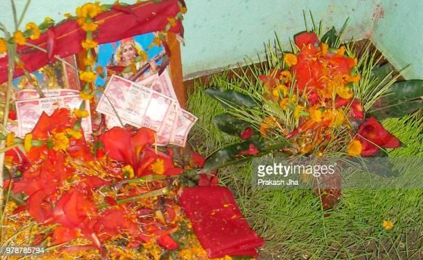 """dashain """"jamara - dashain stock photos and pictures"""