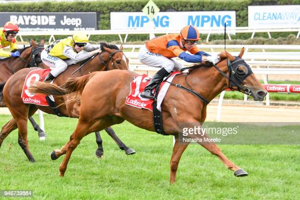 Daskarzine ridden by Jye McNeil wins the Ladbrokes Odds Boost Handicap at Mornington Racecourse on April 16 2018 in Mornington Australia