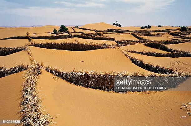 Date palm branch fences to stem the sand tide Sahara Desert