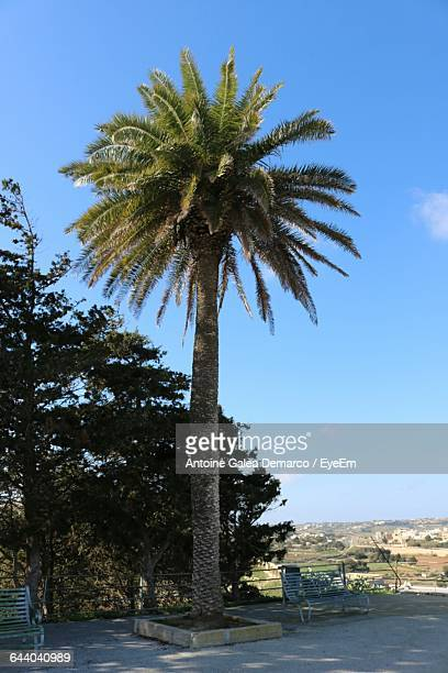 date palm tree on field against sky - date palm tree stock pictures, royalty-free photos & images