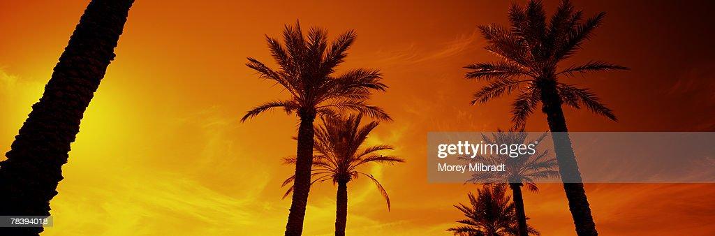 mijn dating plaats Phoenix Arizona
