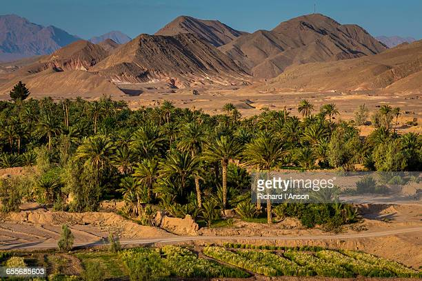 date palms around village - date palm tree stock pictures, royalty-free photos & images