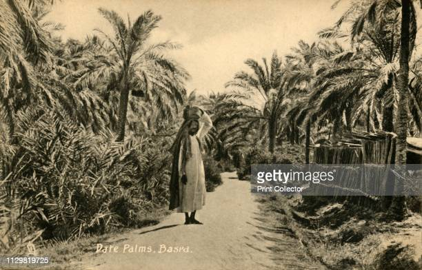 Date Palms, Basra', circa 1918-circa 1939. From an album of postcards. Artist Unknown.