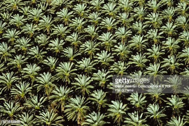 Date Palms, California, United States, circa 1970s.