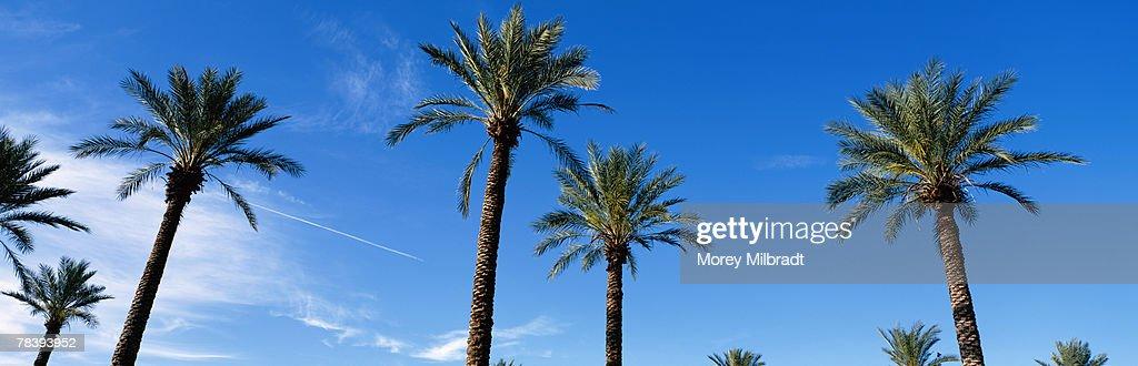dating i Phoenix Arizona