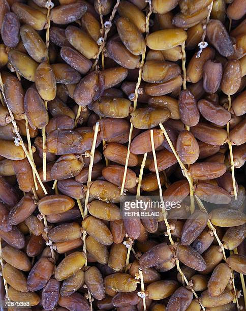 Dates are pictured in El Fawar in the southern Tunisian town of Douz 25 December 2006 as the 39th International Sahara Festival opens The festival...