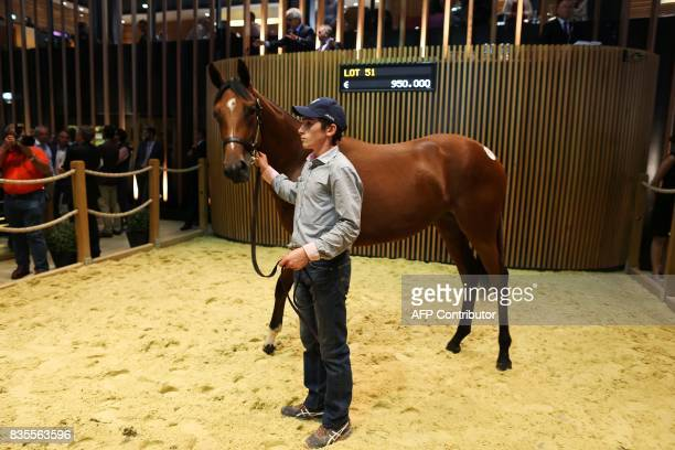 Daughter of Galileo and Prudenzia from The 'Haras des Monceaux ' is presented and sold for 950000 euros during the Yearlings sales one of the world...