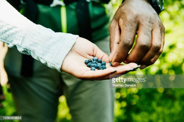 daughter sharing freshly picked wild blueberries with father during hike - foerageren stockfoto's en -beelden