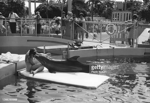 Dauphin dans un bassin du Miami Seaquarium, en avril 1968, en Floride, Etats-Unis.
