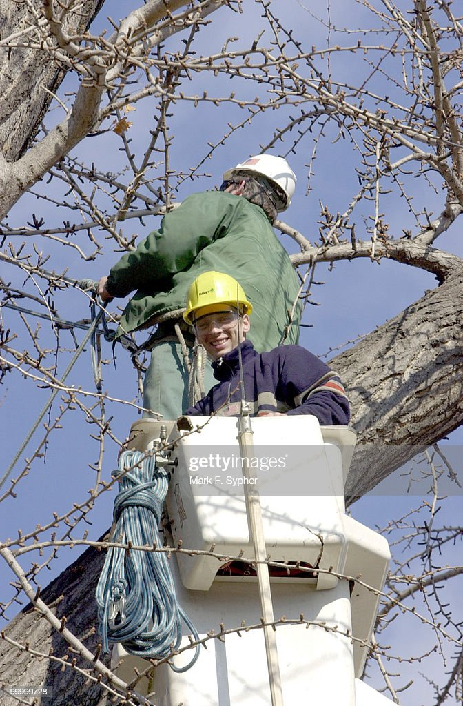 Dave Kunkel (in basket) and Tom Cannon, prune trees Tuesday on the east lawn of the U.S. Capitol.