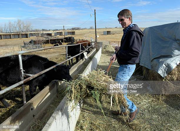Dave Loeffler gives some of his young heifers a serving of hay The city of Brighton is buying up acres of land around the city and leasing it back to...